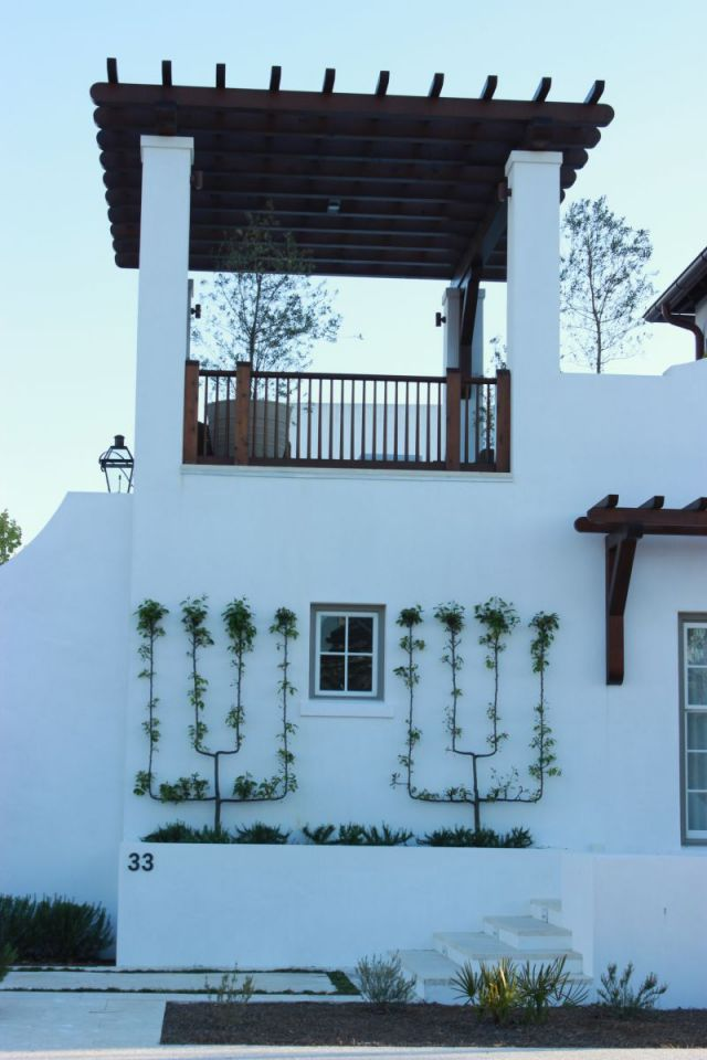 Alys Beach - look at that beautiful vine against the white smooth wall.
