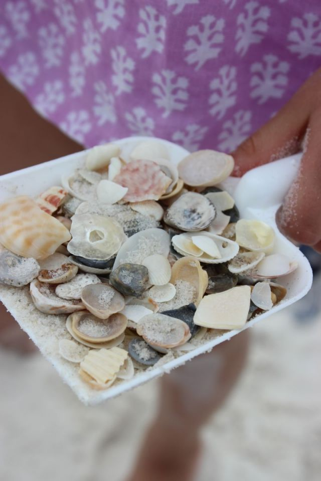 Seashell hunting always keeps us occupied. That shirt is from (last year) Rickshaw Designs if you are wondering. :)